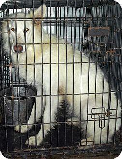 German Shepherd Dog Mix Dog for adoption in Bandera, Texas - 12-5998