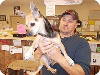 Terrier (Unknown Type, Small) Mix Dog for adoption in Heber Springs, Arkansas - Jo Jo