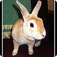 Adopt A Pet :: Riley - Williston, FL
