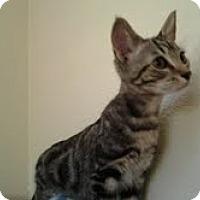 Adopt A Pet :: Henry - Modesto, CA