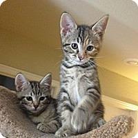 Adopt A Pet :: Margie - Chandler, AZ