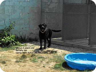 Labrador Retriever Mix Dog for adoption in Napoleon, Ohio - Tracy