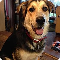 Adopt A Pet :: Reacher - Bedminster, NJ