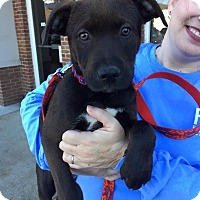 Adopt A Pet :: Max - Marietta, GA