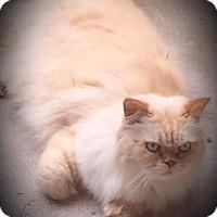 Adopt A Pet :: Luke - Fairborn, OH