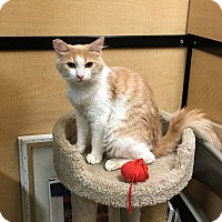 Adopt A Pet :: Simpson - Riverside, CA