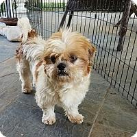 Adopt A Pet :: Mango - San Dimas, CA