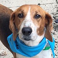 Adopt A Pet :: Twix *Adopt or Foster* - Fairfax, VA