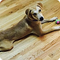 Adopt A Pet :: Bahlow - Harrison, NY