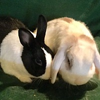 Adopt A Pet :: Savannah and Basil - Waynesboro, VA