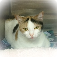 Adopt A Pet :: Aubree - Webster, MA