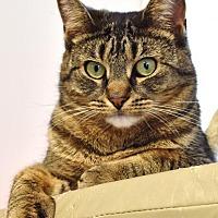 Adopt A Pet :: Hannah (HK1) - Lawrenceville, NJ