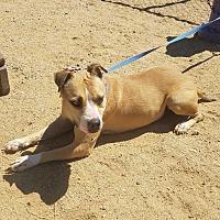 Adopt A Pet :: Sadie - California City, CA