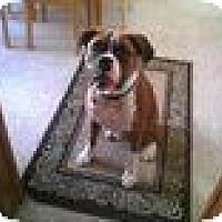 Adopt A Pet :: Gunner - Alliance, NE