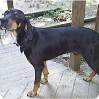 Adopt A Pet :: Barney - cedar grove, IN