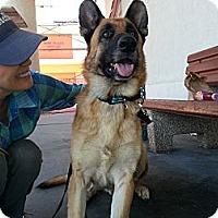 Adopt A Pet :: Sarge - Santa Monica, CA