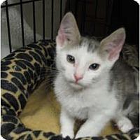 Adopt A Pet :: Comet - Modesto, CA