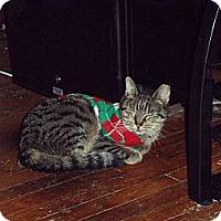 Adopt A Pet :: Cassie - feasterville, PA