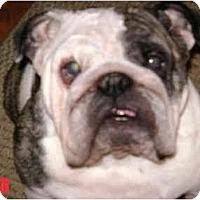Adopt A Pet :: Sophie - Winder, GA