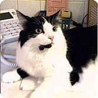 Adopt A Pet :: Buddha - Medway, MA