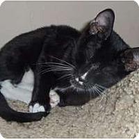 Adopt A Pet :: Alex - Orlando, FL