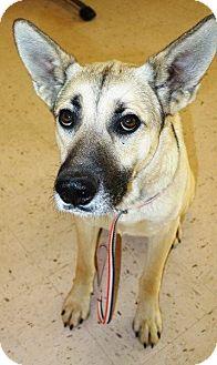 German Shepherd Dog Mix Dog for adoption in McDonough, Georgia - Calloway