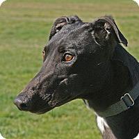 Adopt A Pet :: Tina - Portland, OR