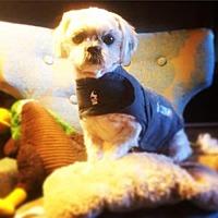Adopt A Pet :: Petey blind - San Diego, CA