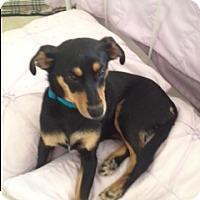Adopt A Pet :: Miri - Homewood, AL