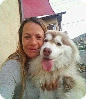 Siberian Husky Dog for adoption in Yucca Valley, California - TAMMY