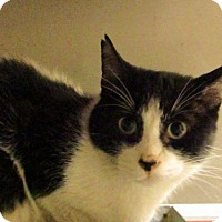 Adopt A Pet :: Jacques - Hamilton, ON