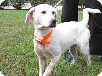 Hound (Unknown Type) Mix Dog for adoption in Windsor, Virginia - Daisy