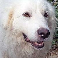 Adopt A Pet :: Annie - pending - Beacon, NY