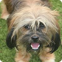 Adopt A Pet :: Guido - MEET ME - Norwalk, CT