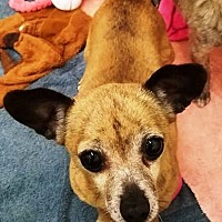 Adopt A Pet :: Cha Cha - Kalamazoo, MI