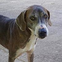 Adopt A Pet :: Gilbert - Staunton, VA