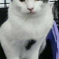 Adopt A Pet :: DIPPER - Davison, MI