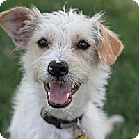 Adopt A Pet :: Dusty - Playmate wanted! - Yorba Linda, CA
