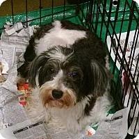 Adopt A Pet :: Dovey - Pembroke, GA