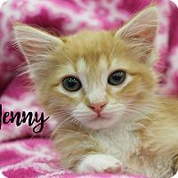 Adopt A Pet :: Jenny - Wichita Falls, TX