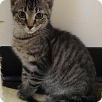 Adopt A Pet :: Earl - Cloquet, MN