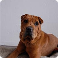 Adopt A Pet :: Dylan - Milan, NY