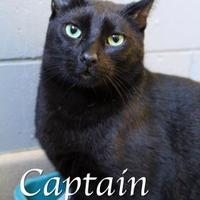 Adopt A Pet :: Captain Sparrow - Bradenton, FL