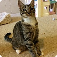 Adopt A Pet :: Carlee - COURTESY LISTING :^) - North Wilkesboro, NC