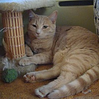 Domestic Shorthair Cat for adoption in Queen Charlotte, British Columbia - Lily