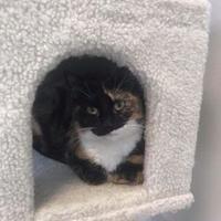 Adopt A Pet :: Tiffany - BATH, NY