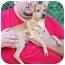 Photo 3 - Miniature Pinscher Mix Puppy for adoption in Inman, South Carolina - Ann of Green Gables