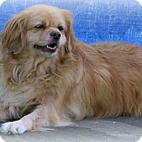 Adopt A Pet :: Kindle - Cantonment, FL