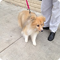 Adopt A Pet :: Suzanne - La Habra, CA