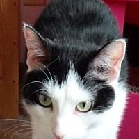Adopt A Pet :: Sirius - Speedway, IN